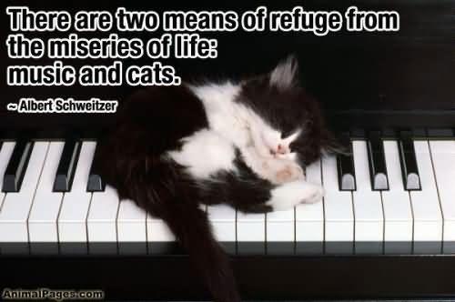 kitten on keys